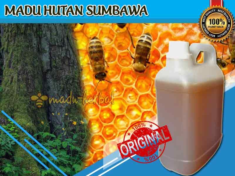review-madu-hutan-sumbawa-asli